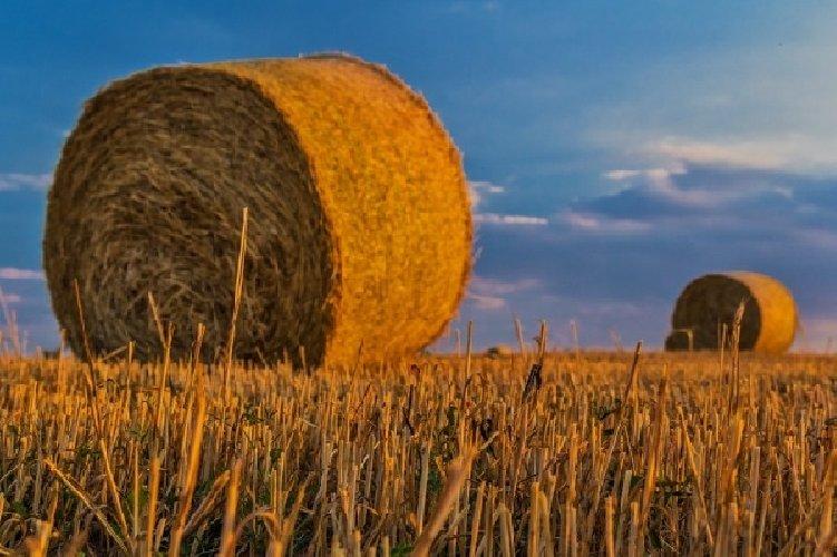 https://www.ragusanews.com//immagini_articoli/26-03-2018/crisi-agricola-iblea-confagricoltura-impegneremo-500.jpg