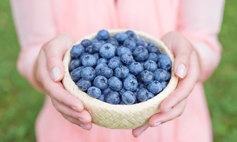 https://www.ragusanews.com//immagini_articoli/26-03-2019/la-dieta-dei-mirtilli-500.jpg