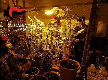 https://www.ragusanews.com//immagini_articoli/26-03-2021/piantagione-di-marijuana-nascosta-in-casa-arrestato-48enne-280.jpg