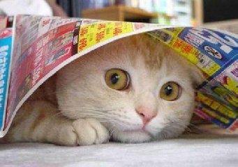 https://www.ragusanews.com//immagini_articoli/26-04-2019/le-ceneri-di-un-gatto-per-la-prima-volta-spazio-240.jpg