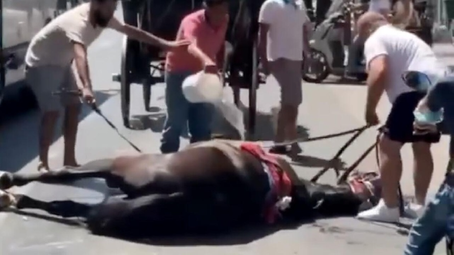 https://www.ragusanews.com//immagini_articoli/26-07-2021/cavallo-stramazzato-per-il-caldo-a-palermo-non-c-e-legge-per-gli-animali-500.jpg