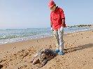https://www.ragusanews.com//immagini_articoli/26-10-2020/rinvenuta-carcassa-di-tartaruga-caretta-caretta-in-decomposizione-100.jpg