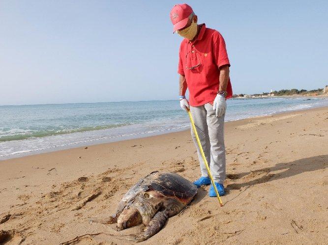 https://www.ragusanews.com//immagini_articoli/26-10-2020/rinvenuta-carcassa-di-tartaruga-caretta-caretta-in-decomposizione-500.jpg
