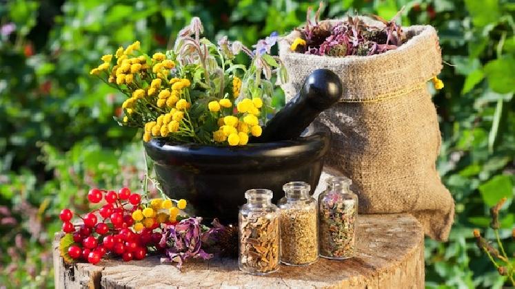 http://www.ragusanews.com//immagini_articoli/27-01-2017/corso-sulle-erbe-medicinali-ragusa-420.jpg