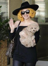 https://www.ragusanews.com//immagini_articoli/27-02-2021/1614415438-ritrovati-i-cani-di-lady-gaga-1-280.jpg