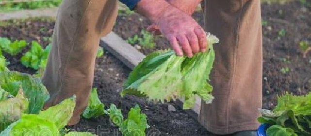https://www.ragusanews.com//immagini_articoli/27-04-2021/anziano-va-a-raccogliere-verdure-e-si-perde-nelle-campagne-280.jpg