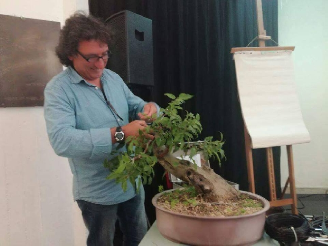 http://www.ragusanews.com//immagini_articoli/27-05-2017/bonsai-orti-pace-serenit-500.jpg