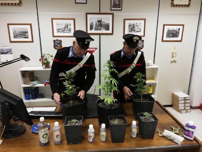 https://www.ragusanews.com//immagini_articoli/27-05-2019/sciclitano-anni-coltiva-droga-casa-500.jpg