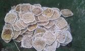 http://www.ragusanews.com//immagini_articoli/27-06-2014/i-cibi-per-i-clandestini-nei-cassonetti-della-spazzatura-100.jpg