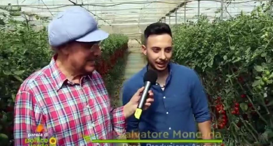 http://www.ragusanews.com//immagini_articoli/27-06-2017/pomodoro-ispica-rete-video-500.jpg