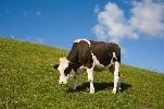 http://www.ragusanews.com//immagini_articoli/27-06-2017/proposte-concrete-futuro-filiera-latte-siciliano-100.jpg