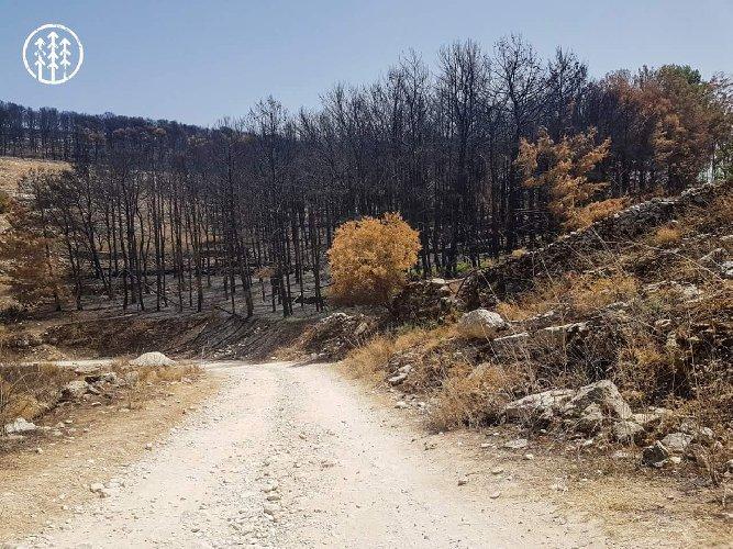 https://www.ragusanews.com//immagini_articoli/27-06-2018/tavolo-tecnico-sugli-incendi-boschivi-chiaramonte-500.jpg