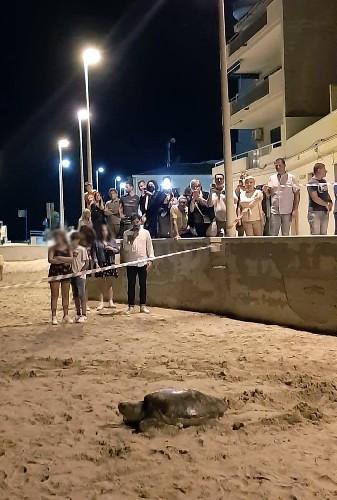 https://www.ragusanews.com//immagini_articoli/27-06-2020/una-tartaruga-depone-le-uova-nella-spiaggia-di-montalbano-500.jpg