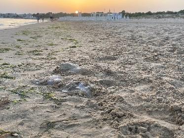 https://www.ragusanews.com//immagini_articoli/27-07-2021/la-barbara-usanza-di-trucidare-le-meduse-in-spiaggia-280.jpg