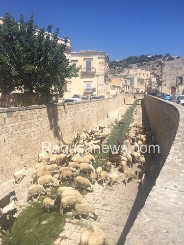 http://www.ragusanews.com//immagini_articoli/27-08-2014/intervallo-con-le-pecore-500.jpg