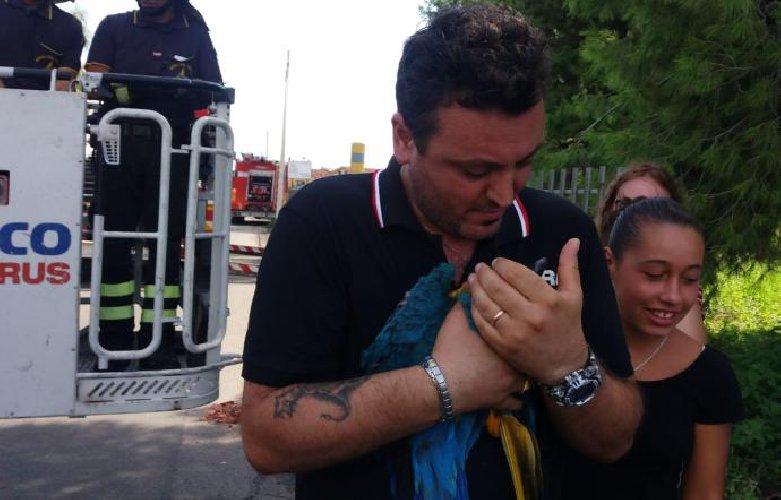 https://www.ragusanews.com//immagini_articoli/27-08-2018/fugge-pappagallo-ararauna-recuperato-pompieri-500.jpg