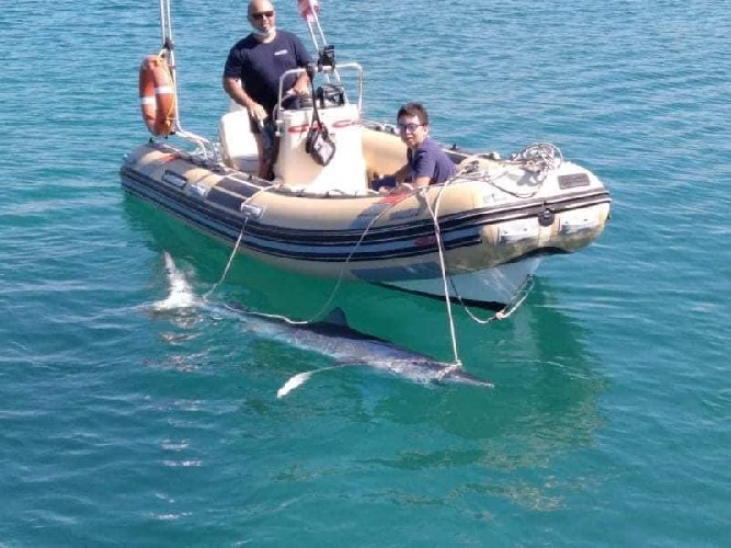 https://www.ragusanews.com//immagini_articoli/27-08-2020/uno-squalo-a-pozzallo-riportato-al-largo-500.jpg