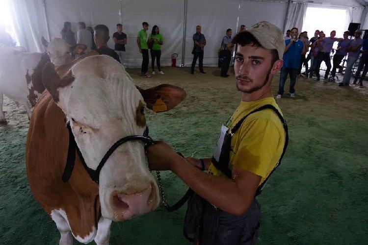 https://www.ragusanews.com//immagini_articoli/27-09-2019/1569593460-inaugurata-la-fiera-agricola-a-ragusa-il-fotoracconto-2-500.jpg