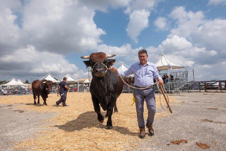https://www.ragusanews.com//immagini_articoli/27-09-2019/1569593460-inaugurata-la-fiera-agricola-a-ragusa-il-fotoracconto-3-500.jpg