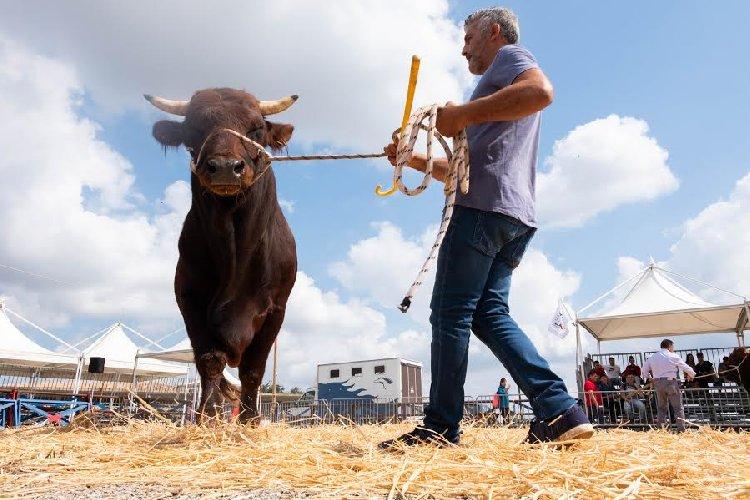 https://www.ragusanews.com//immagini_articoli/27-09-2019/inaugurata-la-fiera-agricola-a-ragusa-il-fotoracconto-500.jpg