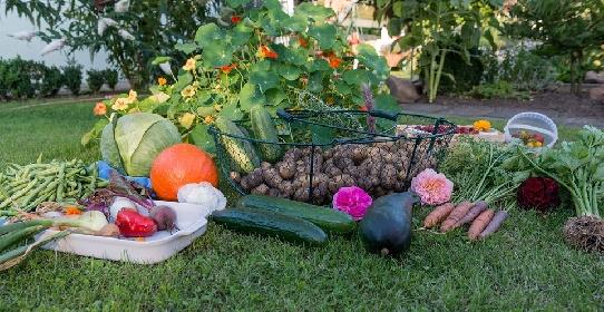 https://www.ragusanews.com//immagini_articoli/27-09-2021/alimenti-brucia-grassi-per-dieta-dimagrante-quali-sono-280.jpg