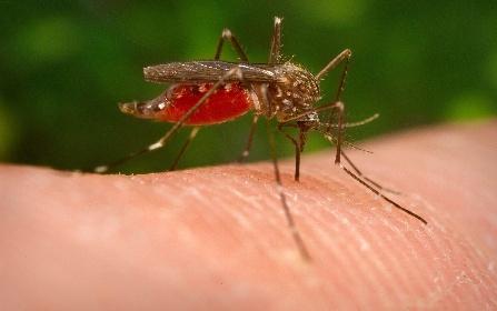 https://www.ragusanews.com//immagini_articoli/27-09-2021/ecco-la-zanzara-giapponese-resiste-al-freddo-e-punge-pericolosamente-280.jpg