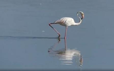 https://www.ragusanews.com//immagini_articoli/27-09-2021/pantano-longarini-la-danza-jazz-del-fenicottero-video-280.jpg