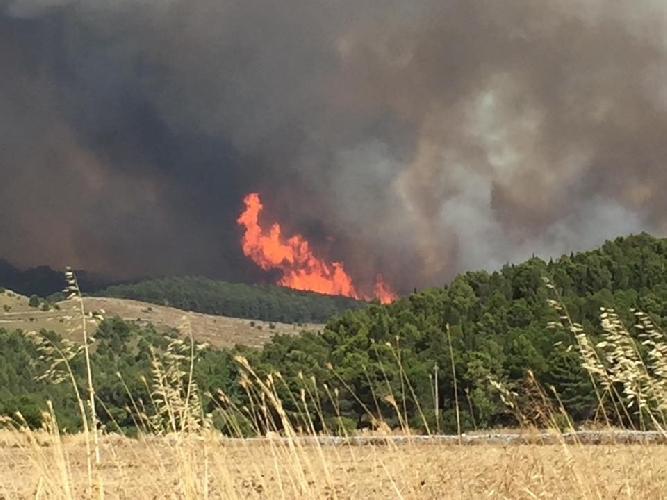https://www.ragusanews.com//immagini_articoli/27-10-2017/pineta-chiaramonte-gulfi-quattro-mesi-dopo-lincendio-video-reportage-500.jpg