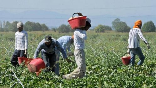 https://www.ragusanews.com//immagini_articoli/27-10-2021/ragusa-dilaga-il-lavoro-grigio-la-schiavitu-dal-campo-alla-tavola-280.jpg