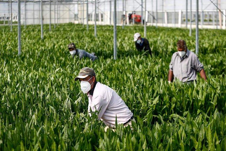 https://www.ragusanews.com//immagini_articoli/27-11-2020/nelle-serre-e-nei-magazzini-agricoli-senza-mascherine-500.jpg