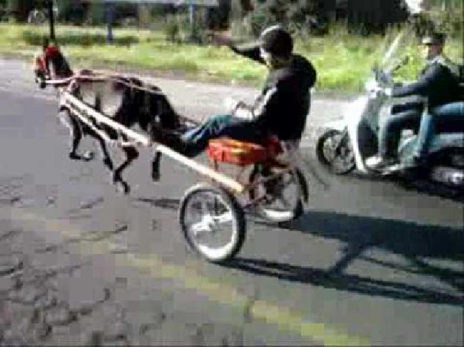 https://www.ragusanews.com//immagini_articoli/27-12-2013/le-corse-clandestine-dei-cavalli-a-scicli-500.jpg