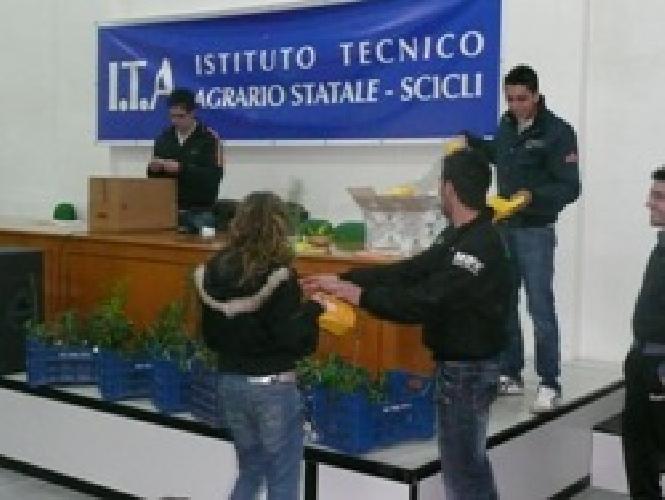 https://www.ragusanews.com//immagini_articoli/28-03-2008/giornale-dell-albero-all-itas-500.jpg