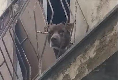 https://www.ragusanews.com//immagini_articoli/28-04-2021/comiso-segregato-per-incattivirlo-giovane-pitbull-liberato-video-280.jpg