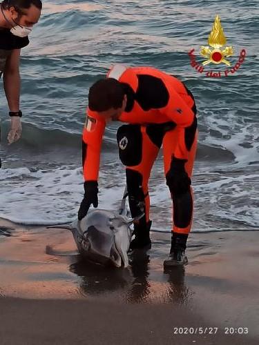 https://www.ragusanews.com//immagini_articoli/28-05-2020/commozione-a-catania-per-la-morte-di-un-delfino-alla-playa-foto-500.jpg