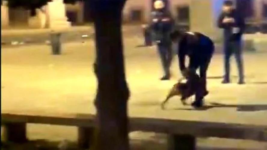 Milano, gli aizza contro il pitbull: carabiniere spara al cane, arrestato rapinatore