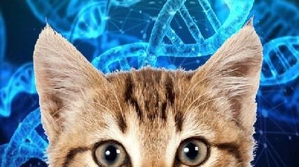 https://www.ragusanews.com//immagini_articoli/28-06-2020/gatto-morde-la-padrona-e-poi-muore-240.jpg