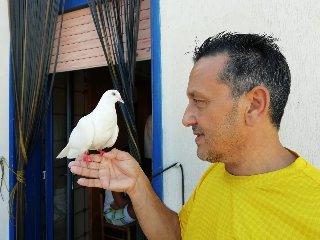 https://www.ragusanews.com//immagini_articoli/28-08-2018/1535443588-comiso-straordinaria-storia-bianca-colomba-cieca-4-240.jpg