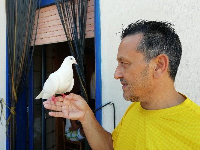 https://www.ragusanews.com//immagini_articoli/28-08-2018/1535443588-comiso-straordinaria-storia-bianca-colomba-cieca-4-500.jpg