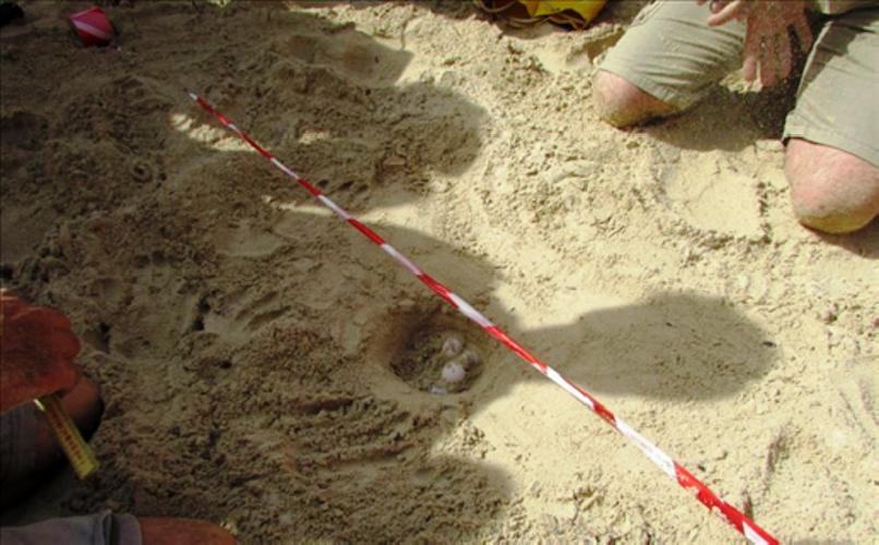 https://www.ragusanews.com//immagini_articoli/28-08-2019/121-tartarughine-sono-nate-in-spiaggia-a-scoglitti-500.png