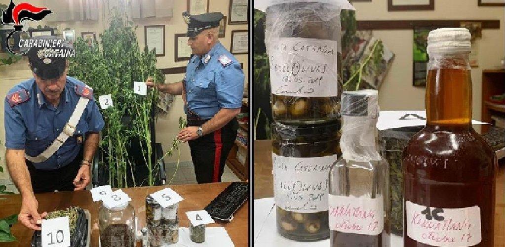 https://www.ragusanews.com//immagini_articoli/28-09-2019/olive-e-tonno-cannabis-arrestato-chef-carmelo-chiaramonte-500.jpg