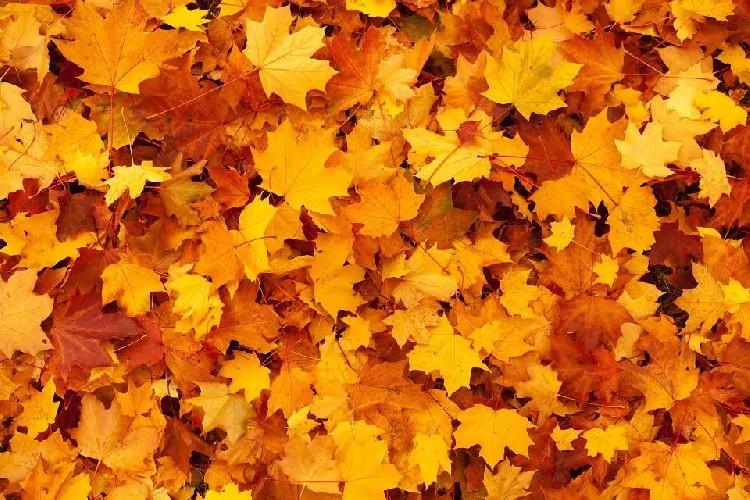 https://www.ragusanews.com//immagini_articoli/28-09-2020/cambio-di-stagione-i-migliori-rimedi-naturali-500.jpg