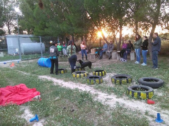 https://www.ragusanews.com//immagini_articoli/28-10-2017/vivere-meglio-canile-corso-operatori-volontari-500.jpg