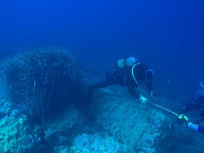 https://www.ragusanews.com//immagini_articoli/28-10-2019/archeologia-sopralluogo-sottomarino-ricerca-di-reperto-di-nave-500.jpg