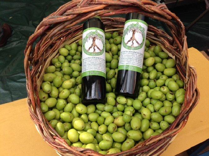 https://www.ragusanews.com//immagini_articoli/28-12-2017/sicilia-lolio-pace-frutto-varieta-olivi-500.jpg