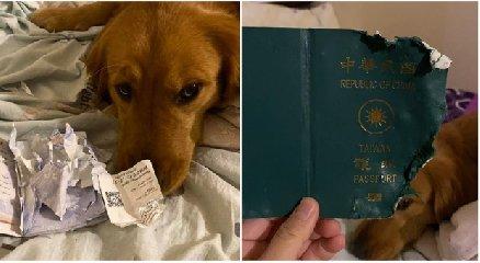 https://www.ragusanews.com//immagini_articoli/29-01-2020/coronavirus-cane-le-mangia-il-passaporto-e-lei-non-parte-per-wuhan-240.jpg