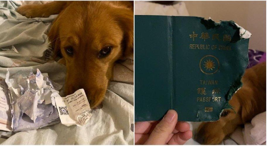 https://www.ragusanews.com//immagini_articoli/29-01-2020/coronavirus-cane-le-mangia-il-passaporto-e-lei-non-parte-per-wuhan-500.jpg