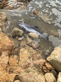 https://www.ragusanews.com//immagini_articoli/29-01-2021/piccolo-delfino-spiaggiato-a-marina-di-ragusa-le-foto-di-una-lettrice-280.jpg