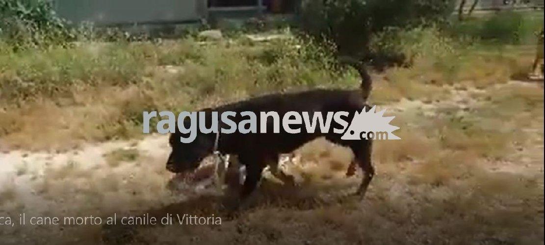 https://www.ragusanews.com//immagini_articoli/29-05-2018/ecco-luca-cane-trovato-morto-canile-vittoria-video-500.jpg