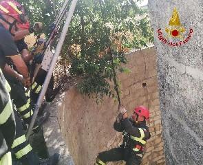 https://www.ragusanews.com//immagini_articoli/29-05-2020/i-pompieri-salvano-un-cagnolino-caduto-in-un-pozzo-240.jpg