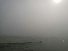https://www.ragusanews.com//immagini_articoli/29-07-2017/arrivata-lupa-nebbia-spiaggia-iblei-video-100.jpg